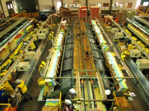CENEA-Sector-Agro-Industria