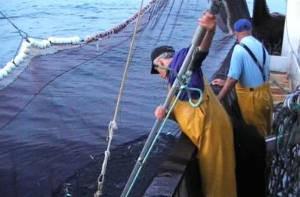 CENEA-sector-industria-pesquera