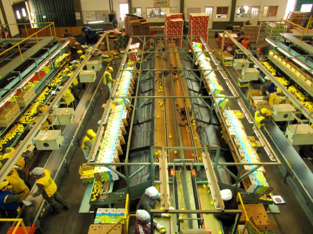 ergonomia sector agro industrial