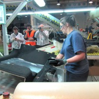 consultores de ergonomia para empresas cenea